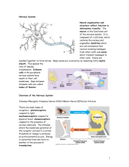 Neurons, Synapses, the Nervous System