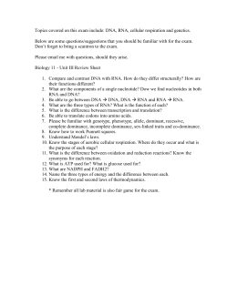 Section 12 3 Rna And Protein Synthesis Worksheet Answers : Section  Rna And Protein Synthesis With Topics Covered On This Exam Include Cellular Respiration From Studylib.net Photos