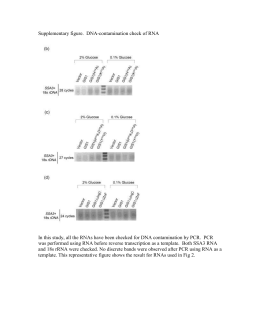Supplementary figure of DNA-contamination check of RNA
