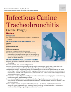 infectious_canine_tracheobronchitis