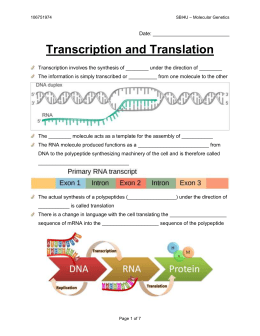 9 - Transcription and Translation