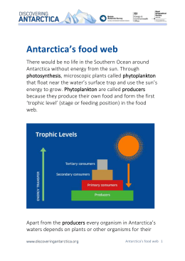 DOWNLOAD Antarctica`s food web (Word)