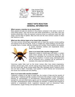 Insect Bite Reaction – General Information