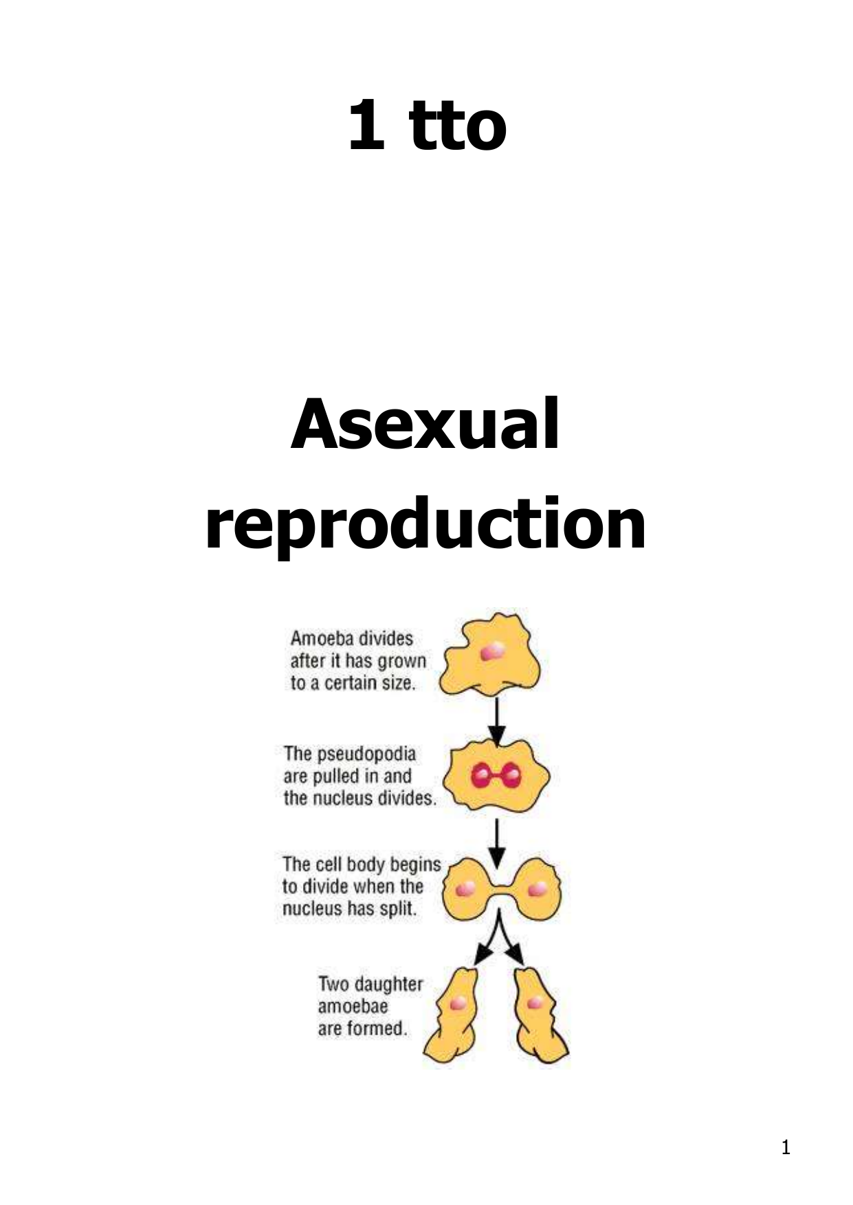 Asexual reproduction related words for autumn