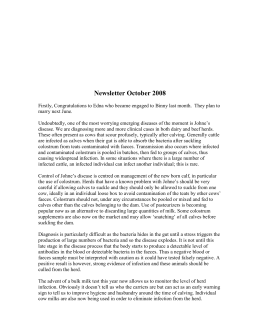 Newsletter October 2008
