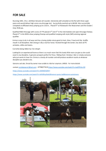 Horse for Sale - Mortimer Riding Club