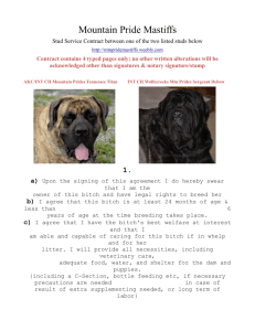 Mountain Pride Mastiffs Stud Service Contract between one of the t