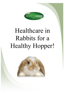Healthcare in Rabbits