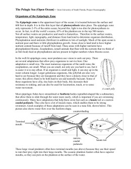 Organisms of the Epipelagic Zone