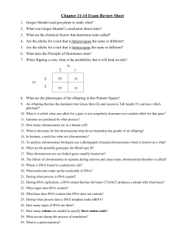 Dihybrid Cross Worksheet In peas, round seed