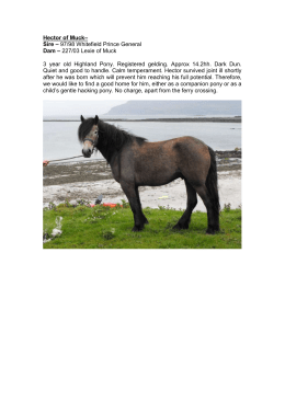 Hector – 2 year old Highland Pony