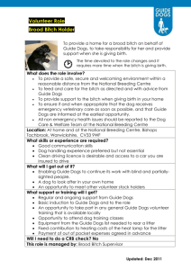 Brood_Bitch_Holder - Guide Dogs for the Blind Association