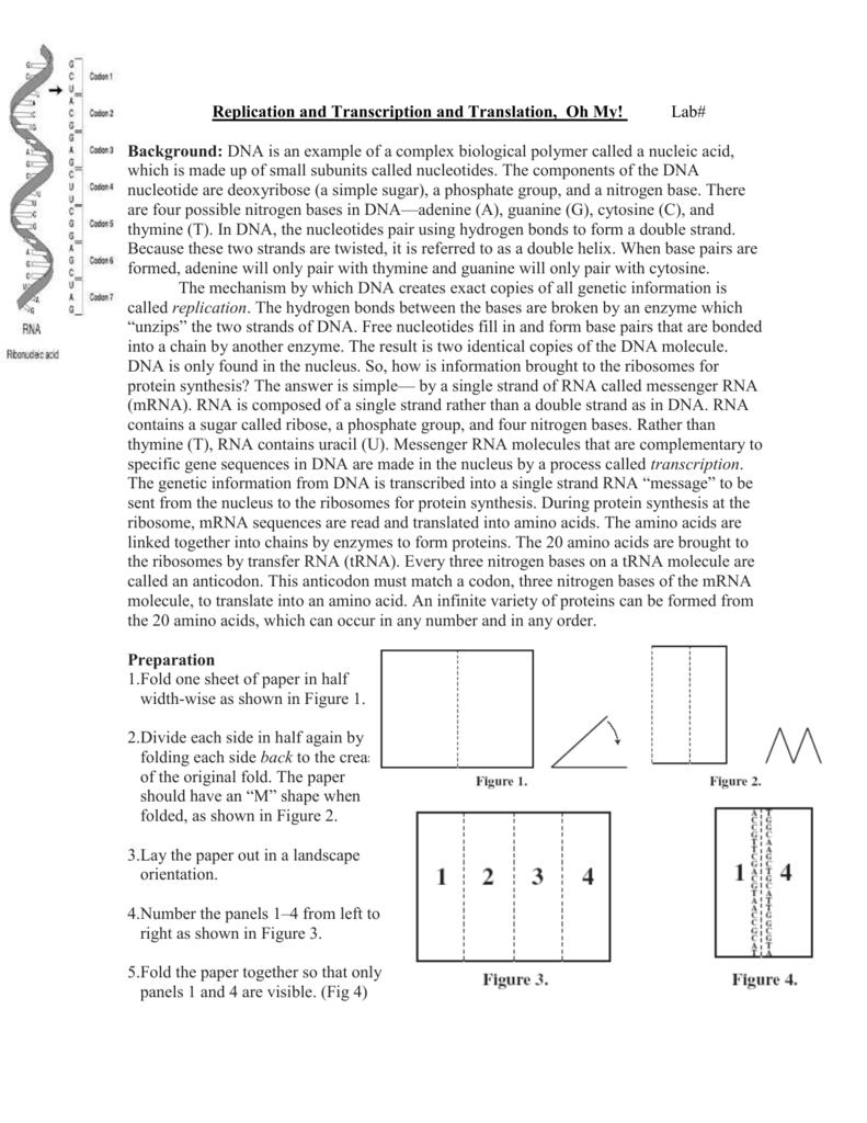 Workbooks translation worksheets : All Grade Worksheets » Dna Transcription And Translation Worksheet ...