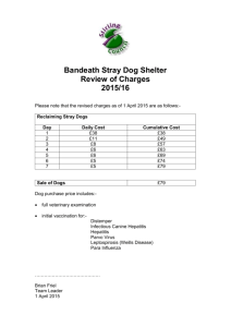 Bandeath Stray Dog Shelter