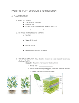 PACKET 7: PLANT STRUCTURE & REPRODUCTION