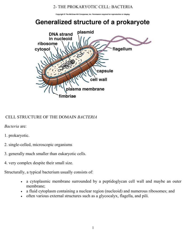 2- THE PROKARYOTIC CELL: BACTERIA CELL STRUCTURE OF