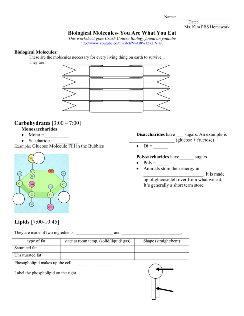 biological molecules worksheet Biological Molecules You Are What You Eat Homework Assignment