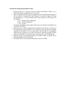 Protocol for intranasal inoculation of mice