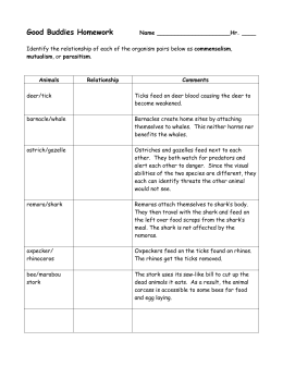 Symbiotic Relationships Worksheet—Good Buddies Barnacle/Whale ...