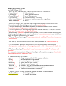 Insects and genetics