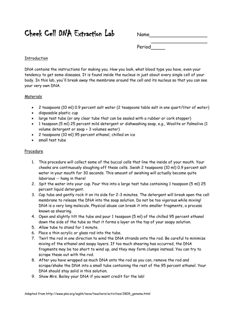 Dna Extraction Virtual Lab Worksheet - Worksheet List