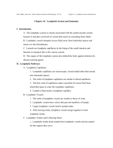 Chapter 16: Lymphatic System and Immunity