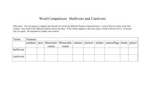 Word Comparison: Herbivore and Carnivore