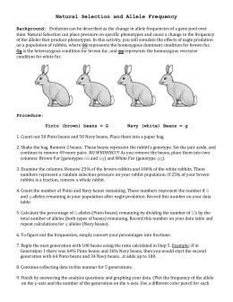 lab worksheet bunny beans natural selection under pressure. Black Bedroom Furniture Sets. Home Design Ideas