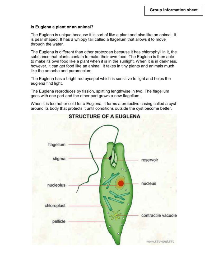 Outside Diagram Of Euglena - Electrical Drawing Wiring Diagram •