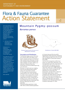 Mountain Pygmy-possum (Burramys parvus) accessible