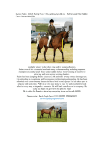 Durran Pedro - British Riding Pony, 14hh, gelding, 6yr old sire