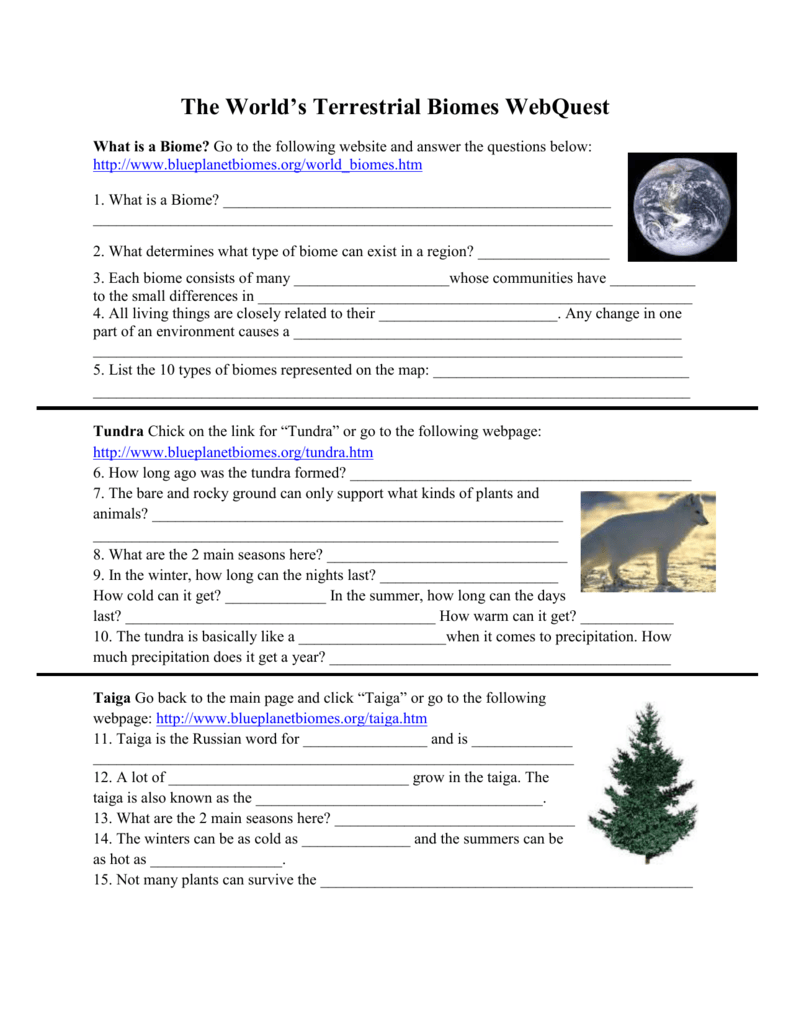 worksheet Biome Webquest Worksheet terrestrial biomes webquest