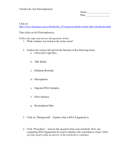 Gel Electrophoresis Virtual Lab Worksheet Answer Key