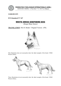 White Swisse Shepherd Dog