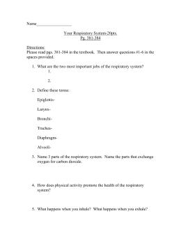 respiratory system quiz study guide name date period rh studylib net Respiratory and Circulatory System Respiratory System Diagram