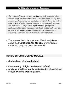 Cell Membrane Worksheet Answer Key version