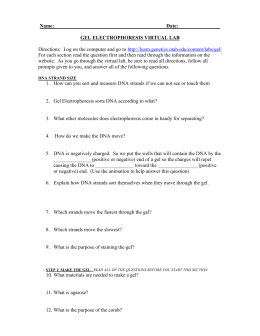 32 Gel Electrophoresis Virtual Lab Worksheet - Ekerekizul