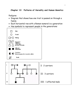 Chapter 12 Patterns Of Heredity And Human Genetics