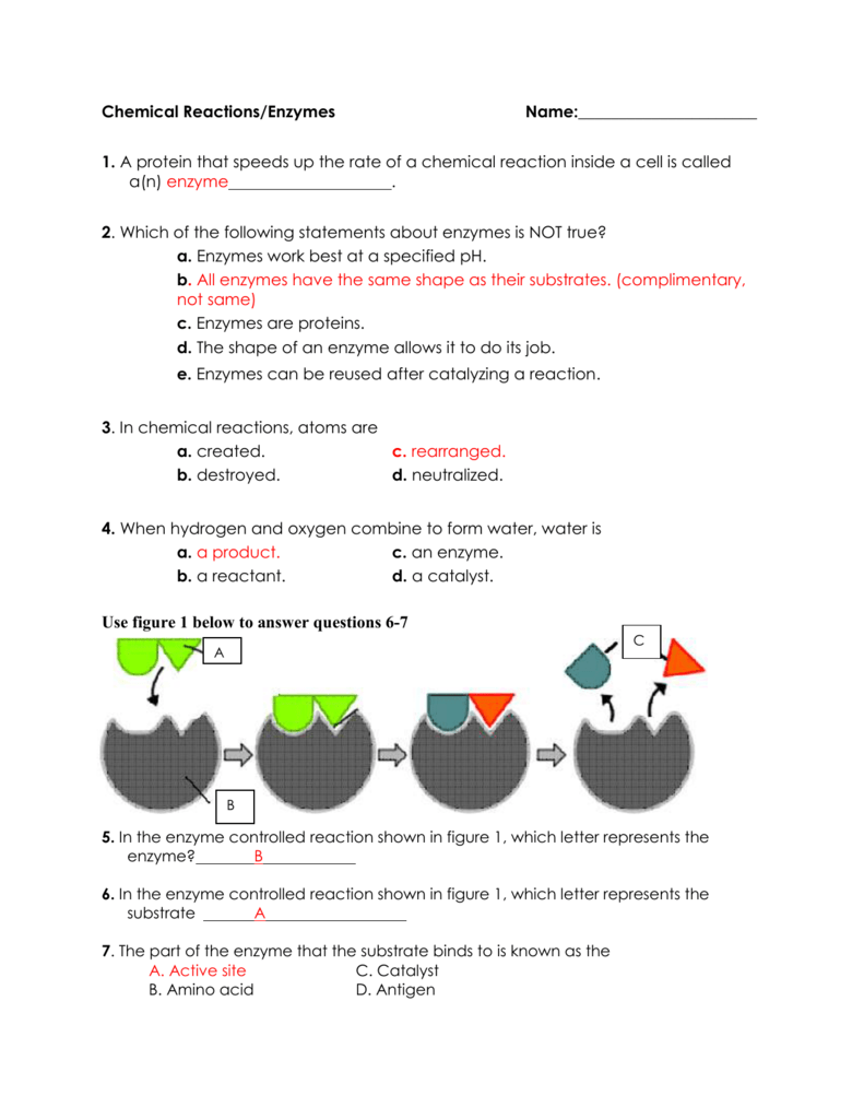 Enzyme And Chemical Reactions Practce W Answers