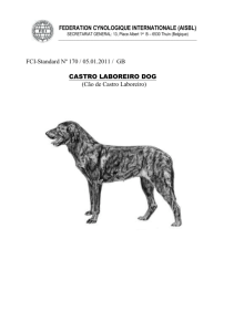castro laboreiro dog