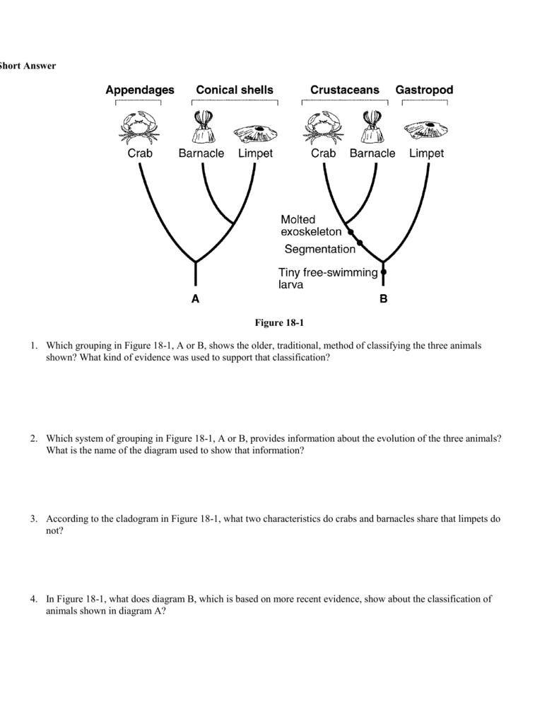 BIOLOGY Chapter 18 WORKSHEET – Cladogram Worksheet Answers