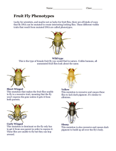 Fruit Fly Phenotypes