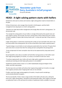 A tight calving pattern starts with heifers