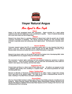 Meyer Natural Angus More Appeal to More People Angus Angus is