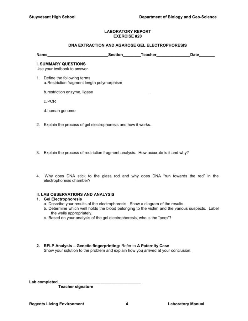 Worksheets Gel Electrophoresis Worksheet laboratory report stuyvesant high school