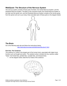 WebQuest: The Structure of the Nervous System