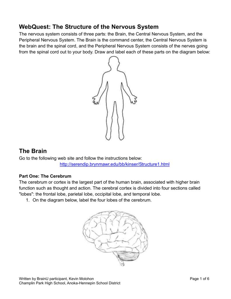 Nervous System Worksheets High School Checks Worksheet