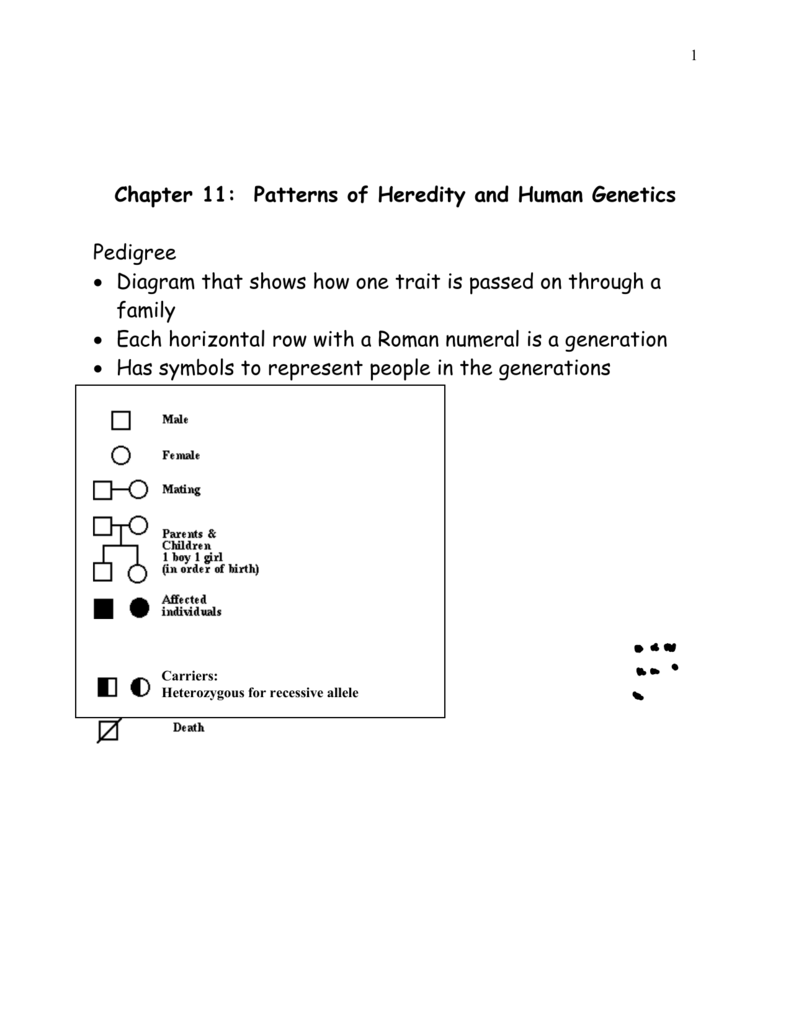 worksheet Chapter 12 Patterns Of Heredity And Human Genetics Worksheet Answers chapter 12 patterns of heredity and human genetics