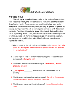 Cell Cycle and Mitosis Packet