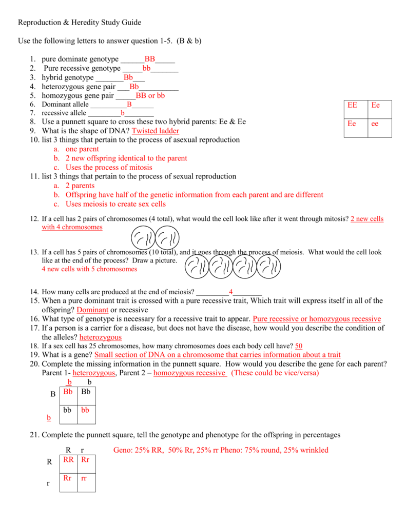 reproduction heredity study guide rh studylib net cells and heredity chapter 2 reading study guide a answers cells and heredity chapter 1 study guide